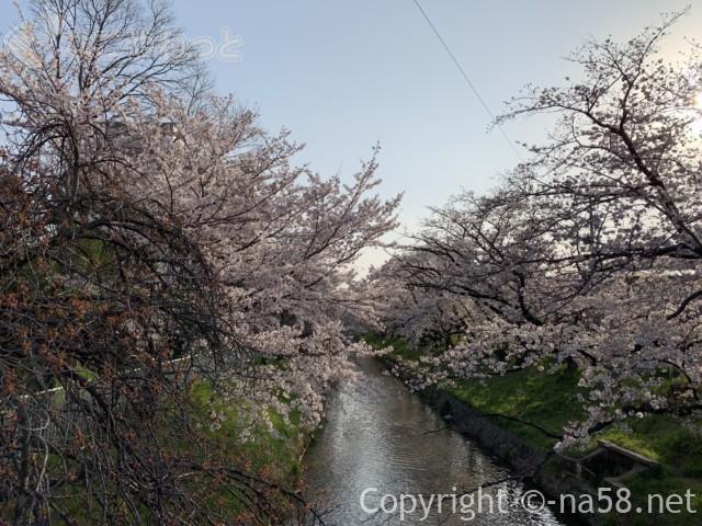 「御用水跡街園」(名古屋市北区)桜並木