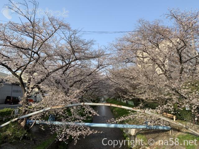 「御用水跡街園」(名古屋市北区)桜並木、瑠璃光橋付近