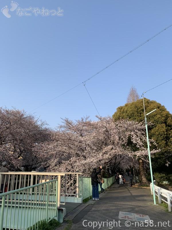 「御用水跡街園」(名古屋市北区)桜並木、瑠璃光橋付近の桜並木