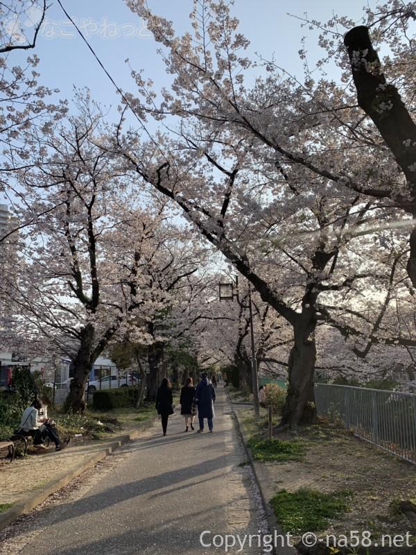 「御用水跡街園」(名古屋市北区)桜並木、散策の方たちと
