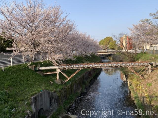 「御用水跡街園」(名古屋市北区)志賀橋から黒川方向への道と桜並木