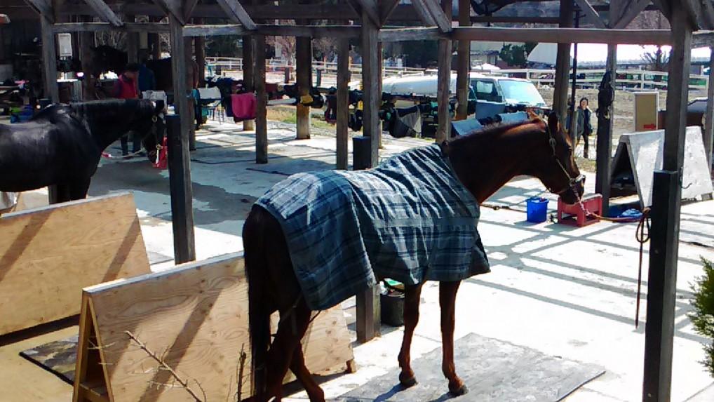 愛知牧場の馬舎
