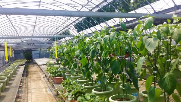 花と野菜のにじ色農場の温室