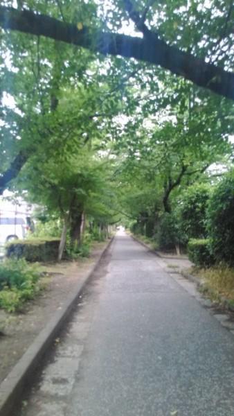 御用水跡公園の小道が続きます。