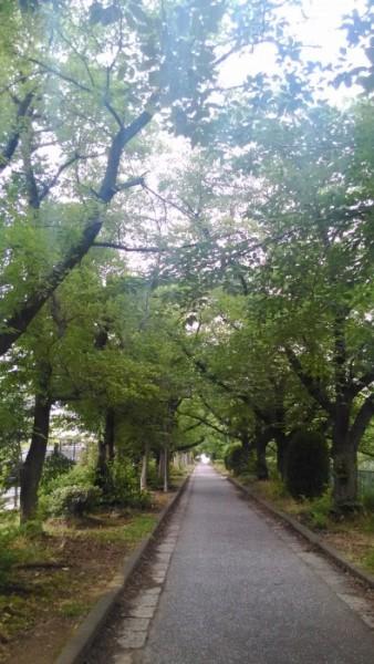 御用水跡公園の小道