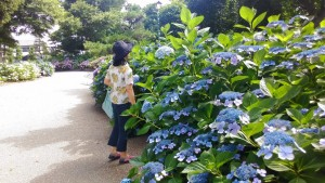 大塚性海寺公園あじさい