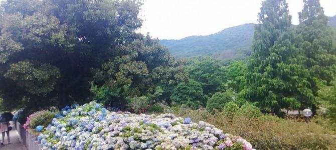 市民四季の森(愛知県小牧市)あじさいの丘2018年・無料大駐車場やトイレ