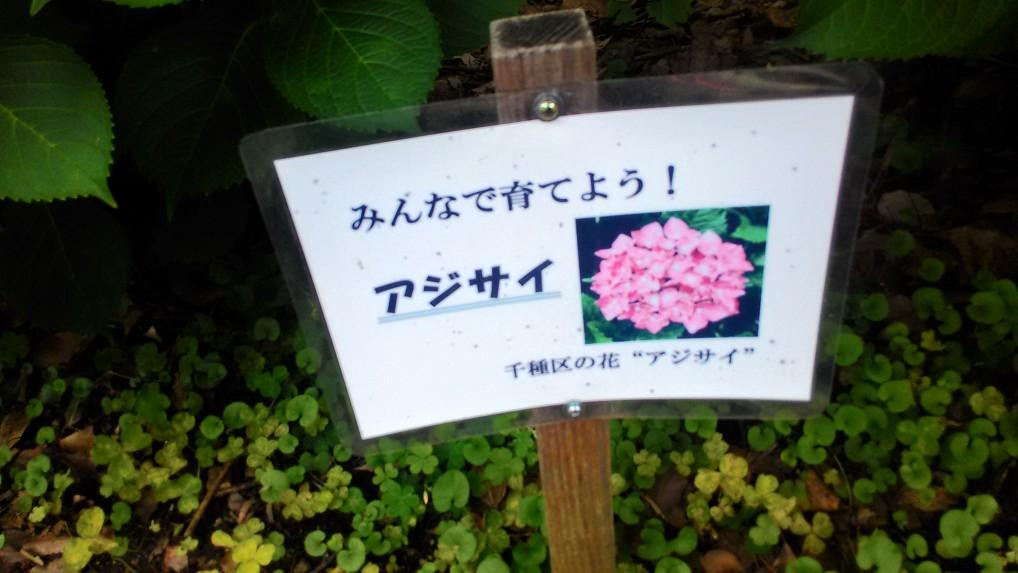 茶屋ヶ坂公園あじさい