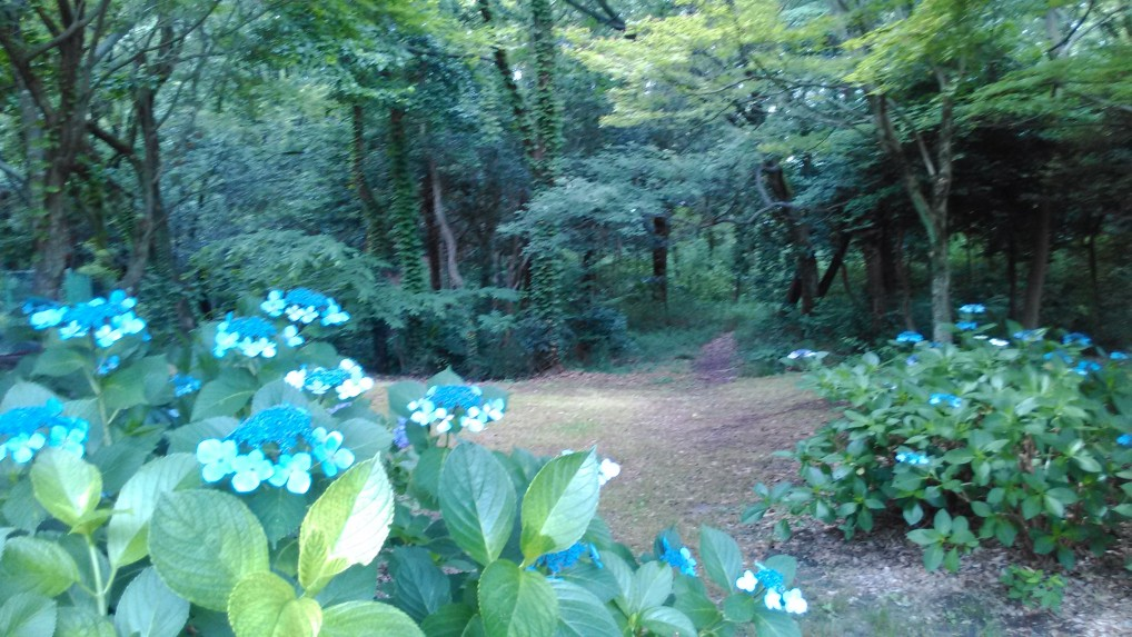 茶屋ヶ坂公園と小径とあじさい
