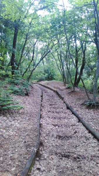 茶屋ヶ坂公園散歩道