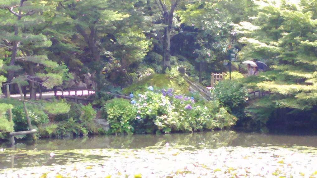 東山動植物園池のほとりのあじさい