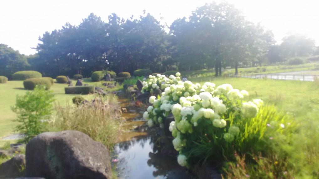 庄内緑地公園のアジサイの写真