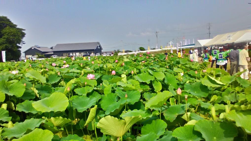 蓮見の会森川花はす田道の駅立田ふれあいの里を望む