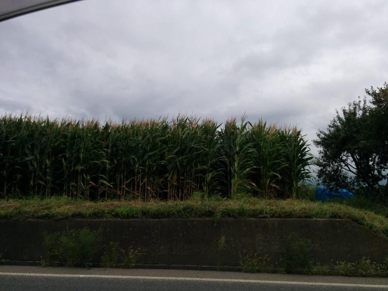 道の駅今井恵みの里の周辺松本の風景