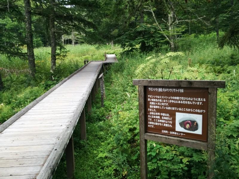 女神湖湿原地帯散策路