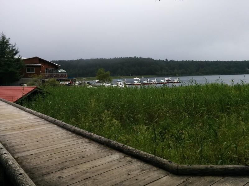 女神湖湿原地帯散策路から女神湖をのぞむ