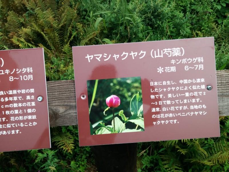 女神湖湿原地の花