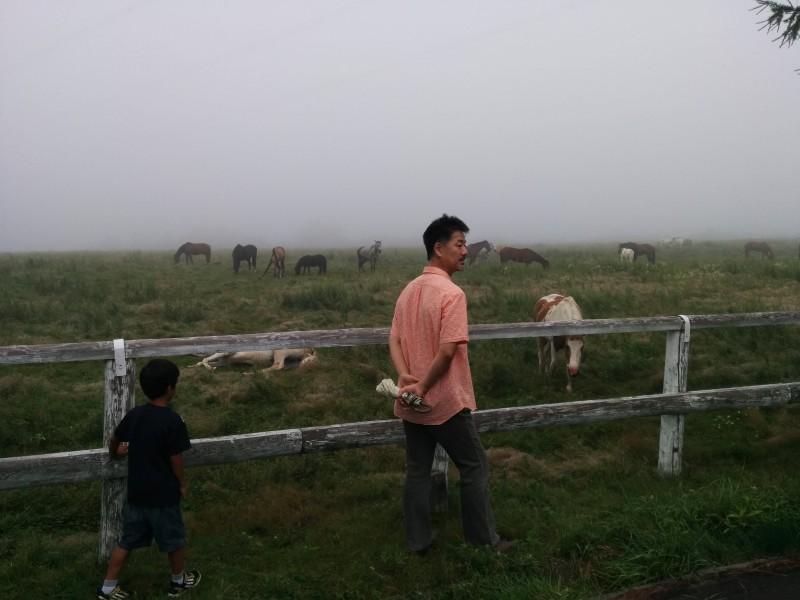 霧の牧場で
