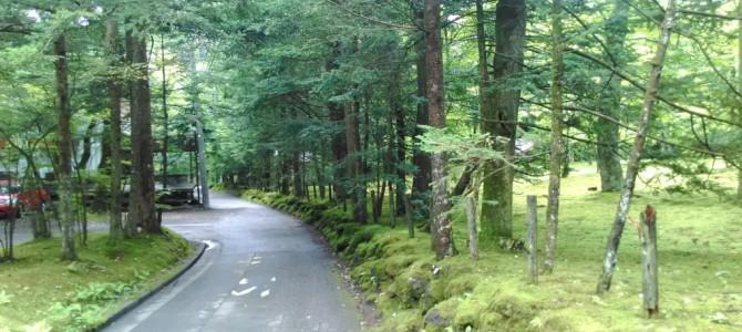 軽井沢を散策・カラマツ林に溶け込む別荘を風景にして