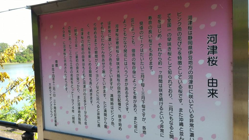 河津桜の看板
