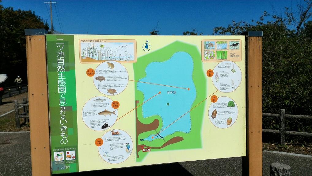愛知県大府市二ツ池公園で観られる生き物