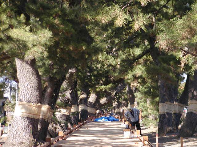 三保の松原(静岡県清水区)御穂神社への参道「神の道」