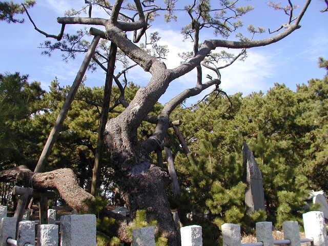 三保の松原(静岡県清水区)羽衣の松