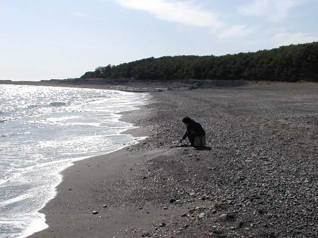 三保の松原(静岡県清水区)の海岸