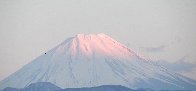舞鶴城公園(甲府城跡)から桜の季節の富士山と展望・山梨県甲府市