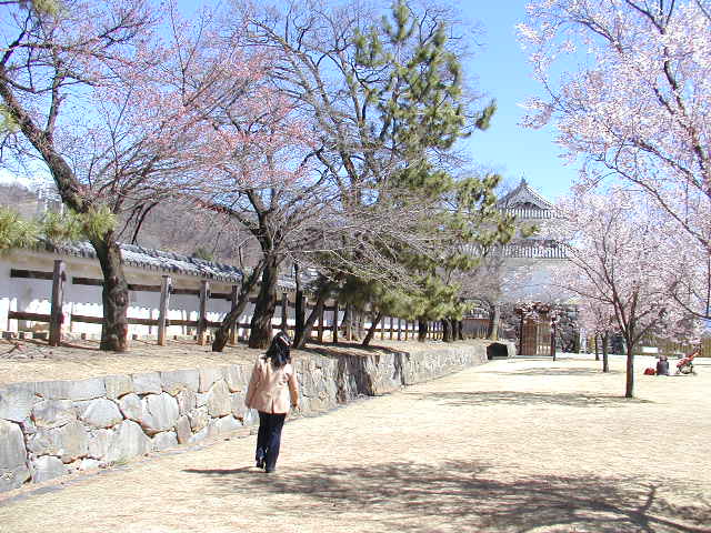 舞鶴城公園(甲府城跡)のソメイヨシノ桜