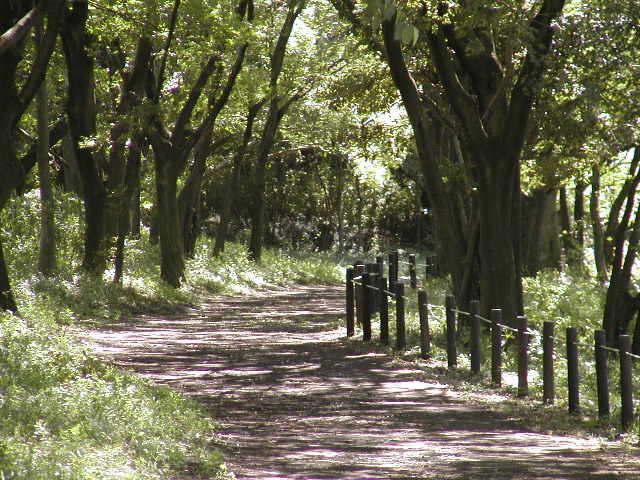 祖父江砂丘(木曽三川公園)散策路