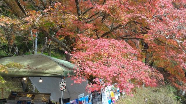 香嵐渓一の谷の素晴らしい紅葉