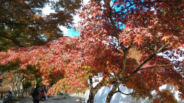 香嵐渓広場の美しい紅葉