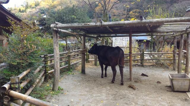 香嵐渓「三州足助屋敷」の牛