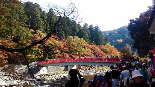 香嵐渓(愛知県豊田市)の紅葉真っ盛り11月16日待月橋
