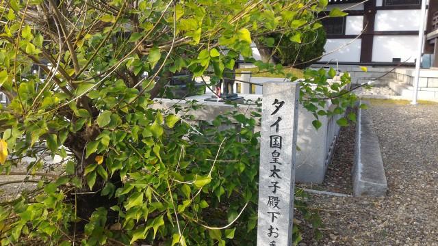 日泰寺境内のタイ国王室皇太子殿下お手植えの木