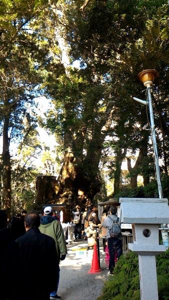 来宮神社の樹齢2000年の大楠