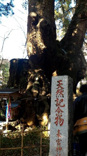 静岡県熱海市来宮神社の天然記念物樹齢2000年の大楠