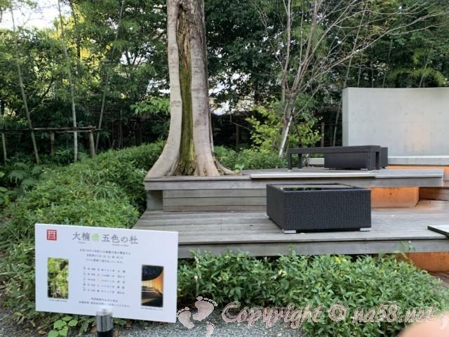 来宮神社(静岡県熱海市)の大楠、撮影スポット、大楠五色の社