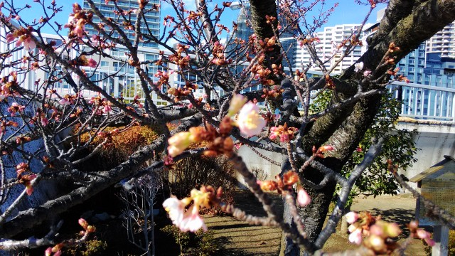 静岡県熱海市のあたみ桜サンビーチにて