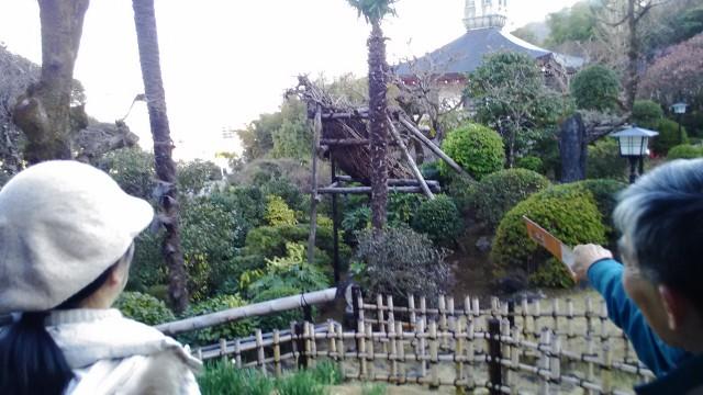 双柿舎の母屋から見た庭にある古い柿の木