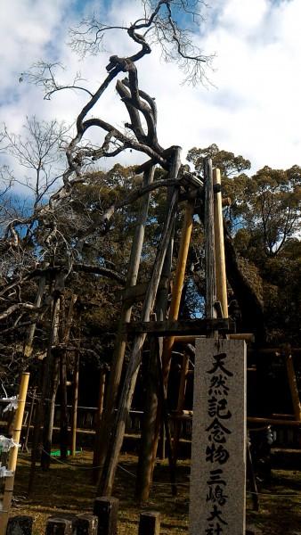 三嶋大社(静岡県三島市)の金木犀
