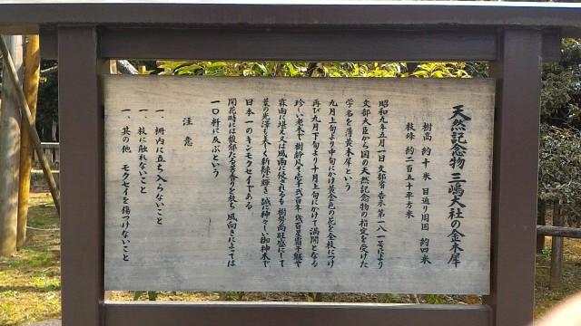 三嶋大社(静岡県三島市)のキンモクセイ