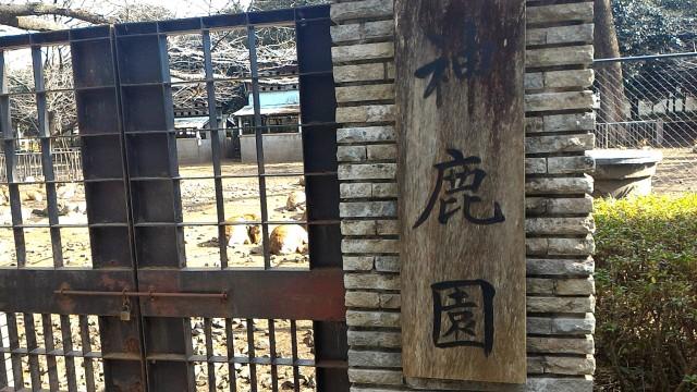 三嶋大社(静岡県三島市)の神鹿園