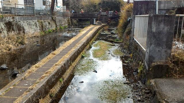 三島市源兵衛川の水辺の散歩道