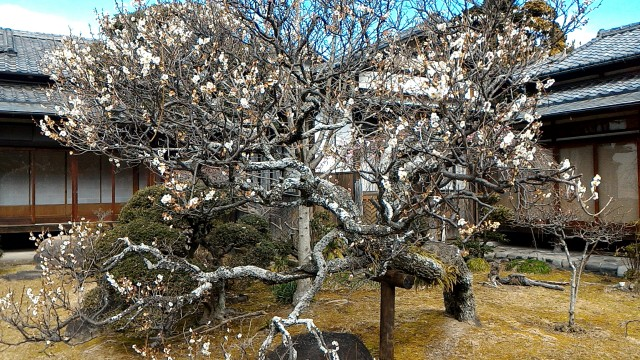 隆泉苑(静岡県三島市)の回遊式庭園の様子