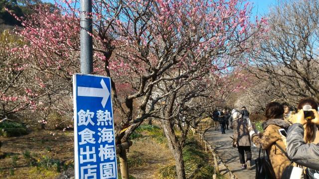熱海梅園内の梅の様子と案内板
