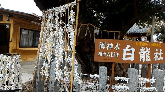 伊奴(いぬ)神社(名古屋市西区)のおみくじ結んである風景