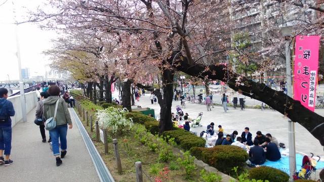 隅田川(東京都)桜まつり隅田公園