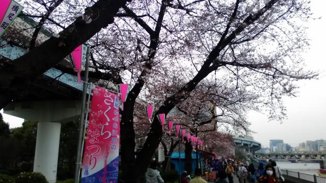 隅田川(東京都)桜まつり